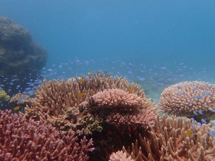 沖繩潛水 珊瑚礁 中文教練