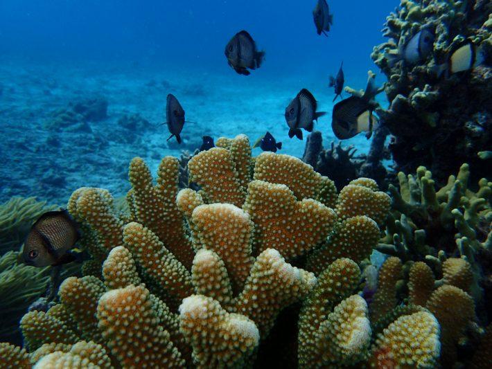浮潛 青洞 潛水 夢幻礁 推薦