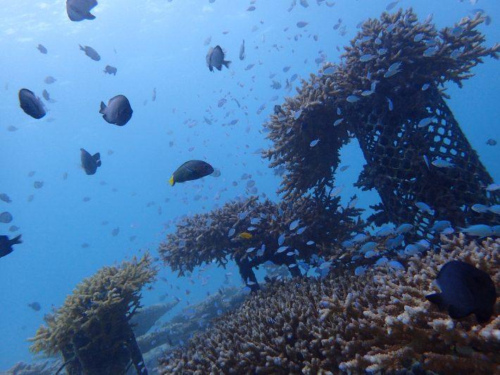 夢幻礁 沖繩
