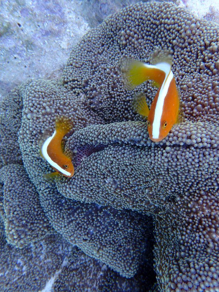 沖繩夢幻礁潛水 推薦