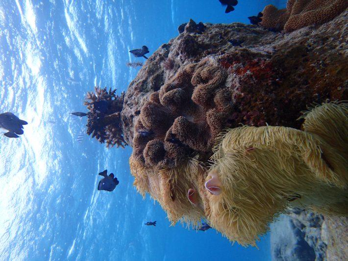 恩納 浮潛 沖繩