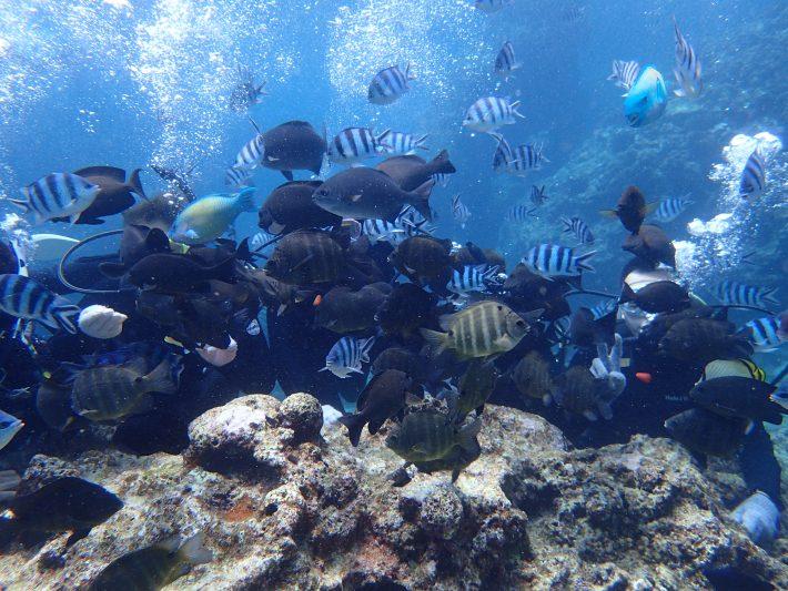 沖繩 潛水課 推薦