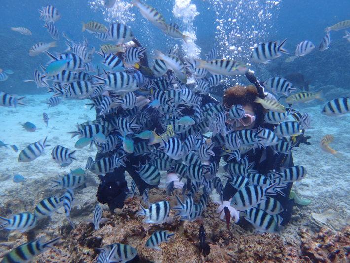 沖繩潛水 潛水證照 六線豆娘魚