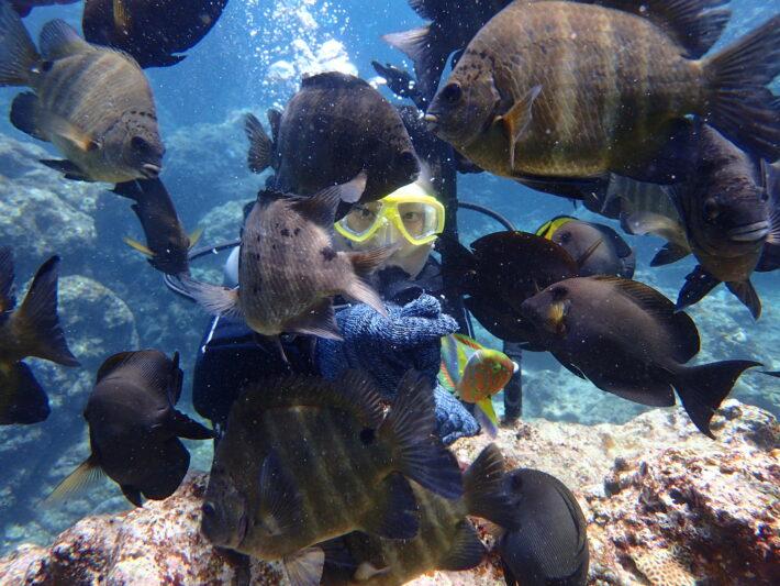青之洞窟潛水 FUN DIVE 潛水課程