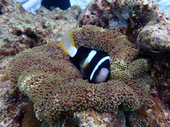 沖繩 潛水 推薦