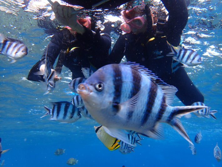 沖繩 潛水 浮潛 六線豆娘魚