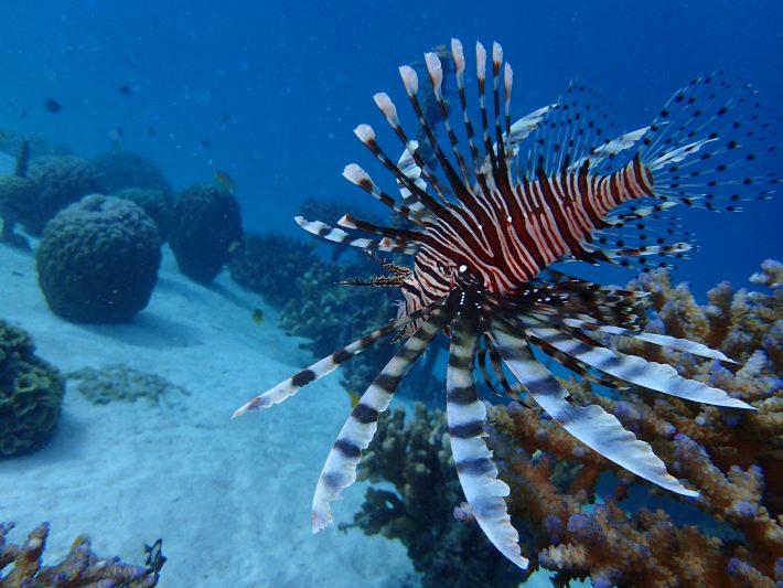 沖繩 潛水