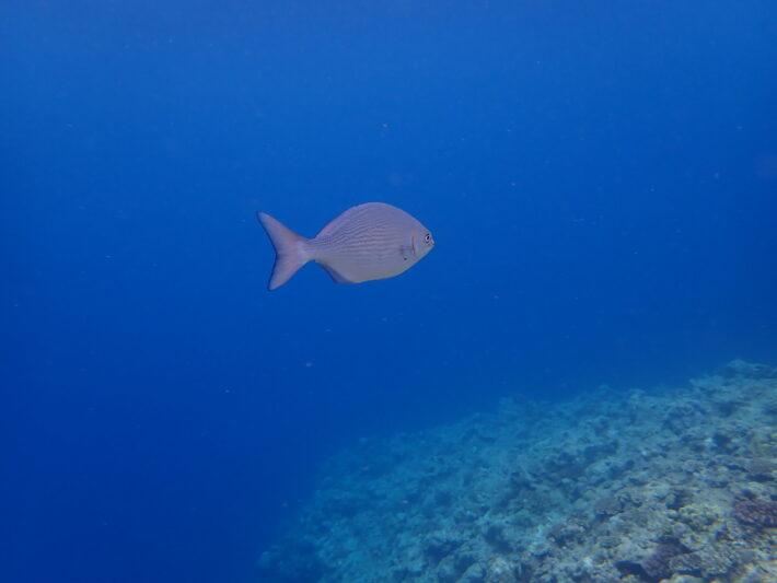 沖繩潛水 青之洞窟 體驗潛水