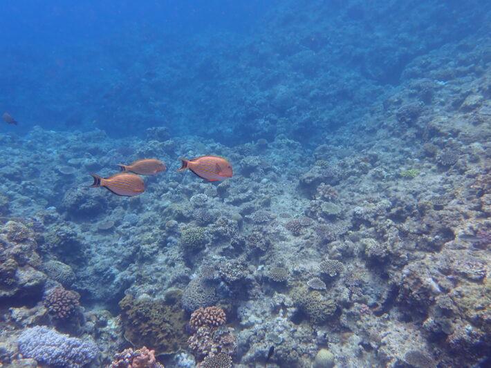 沖繩 青之洞窟 潛水 浮潛