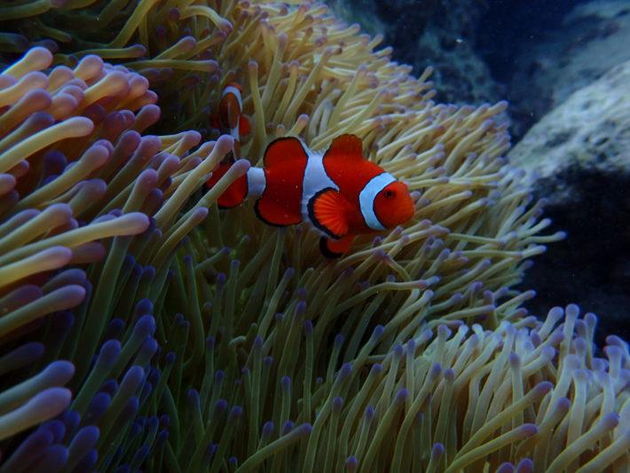 沖繩潛水尼莫