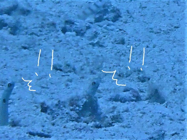 沖繩 海中生物 浮潛 藍洞