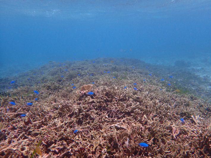 沖繩 青洞 浮潛 中文