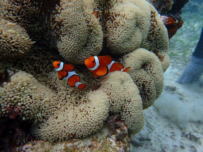 沖繩夢幻礁 潛水 推薦