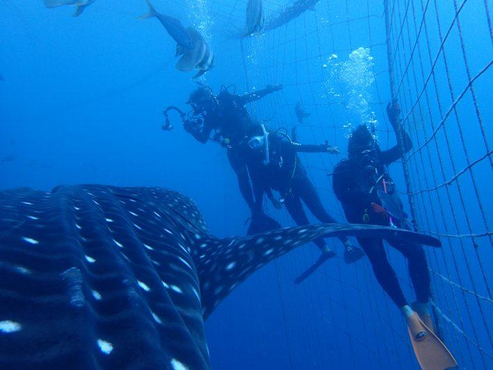 證書 潛水 沖繩 推薦