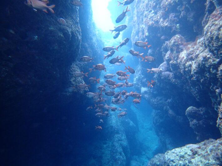 沖繩潛水 藍洞浮潛 青之洞窟FUN DIVE