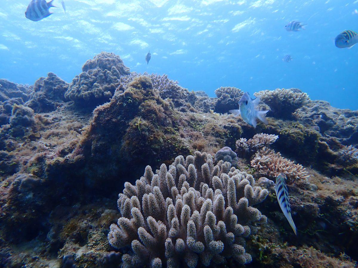 軟珊瑚真的很漂亮